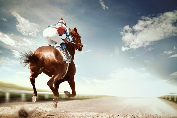 a guide to betting on horses